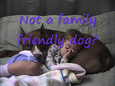 Against Breed Specific Legislation. (argumentative essay) Featuring Pit Bulls