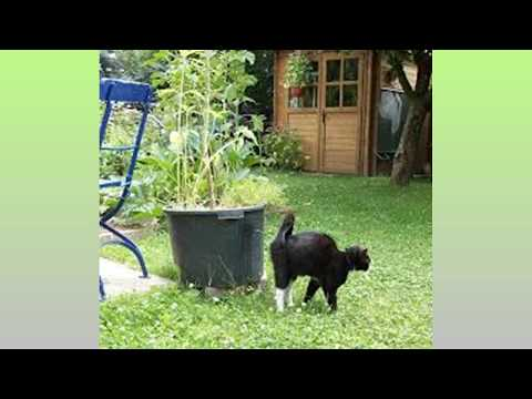 Cat Spraying No More, How Do I Stop My Cat From Spraying Indoors, Outside