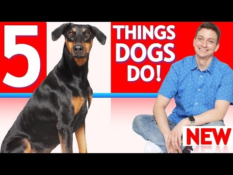 Why Do Dogs Do These 5 Weird Things?