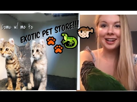 Come w/ me to Exotic Pet store | Lynx kittens!! | Reptiles!! | Ocean animals!! |