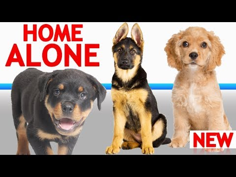 If Your Dog Gets Lonely While You're Away, This Can Help!