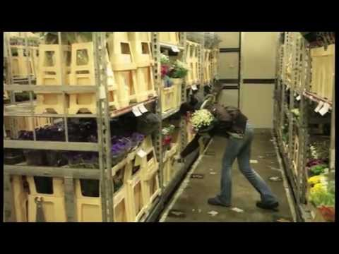 Flora Direct Holland - How Florists get the Freshest Flowers in the UK