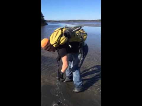 Clamming with a plunger.
