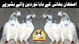 Batera Breed pure old sialkoti high flyers orignol kabootar nayaab