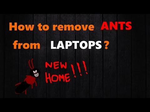 Removing Ants from Laptops