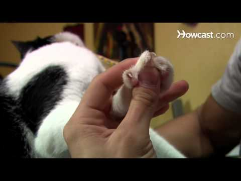 How to Clip Your Cat's Nails