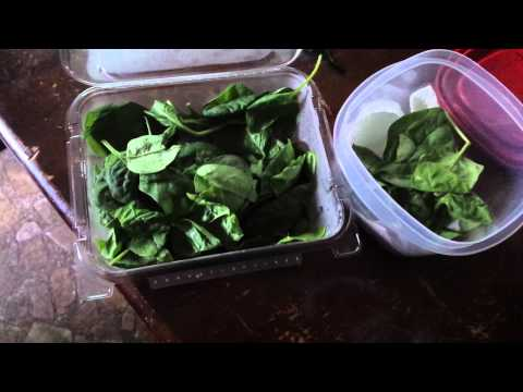 How to store spinach and other leafy greens