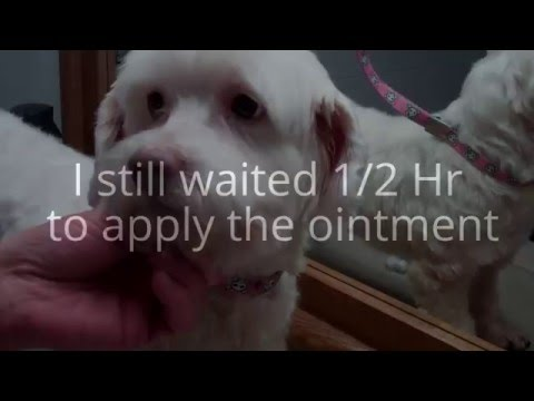 Dog Ear Infections (Conway's Journey Pt 6)