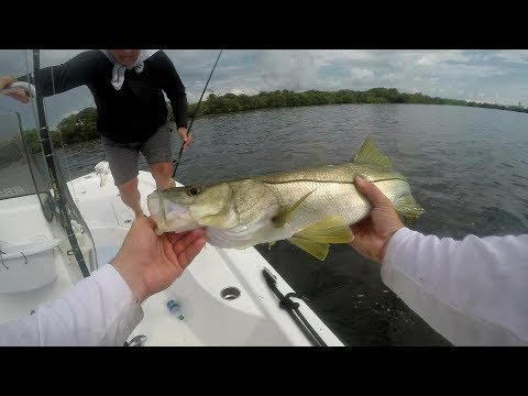 Dead Cut Bait Catches Snook and Redfish. Mid summer fishing strategy.