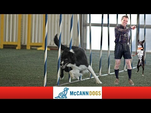 Dog Agility World Team Tryouts Prep Day- With An Austrian Twist