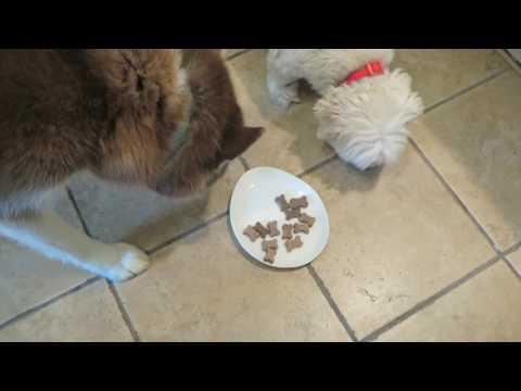 Dogs put Vita Bone® Artisan Inspired® Soft Dog Treats to the test!