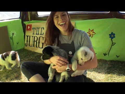 Van Full of Puppies Surprises College Students Before Finals