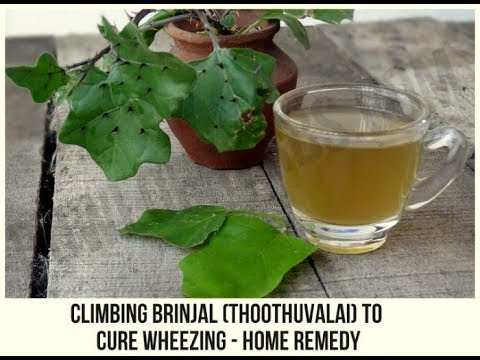 Cure wheezing with climbing brinjal (thoothuvalai) - Ayurveda