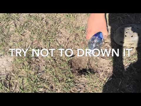How To Find/catch Tarantulas