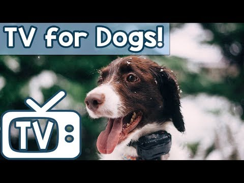 Dog TV Calming Anxiety Music  - Videos for Dogs to watch - Relax Your Dog Nature Footage (New 2018)