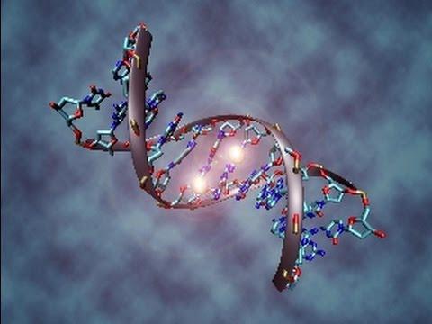 Genetics, epigenetics and disease