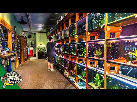 FISH STORE TOUR