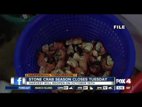 Stone Crab Season Closes May 15th in Southwest Florida