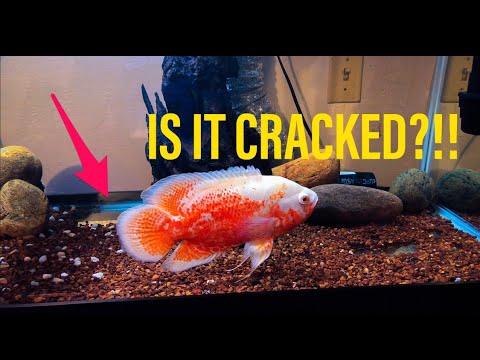 Underwater Aquarium Footage!