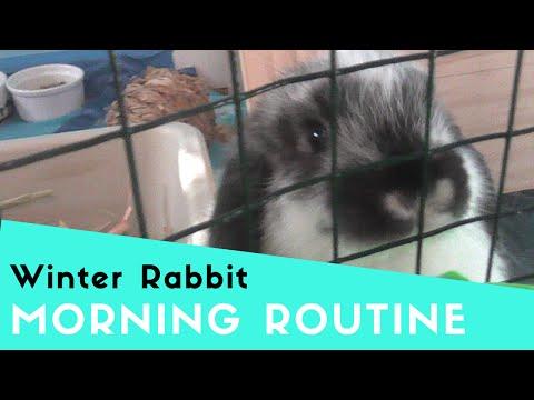 WINTER RABBIT MORNING ROUTINE