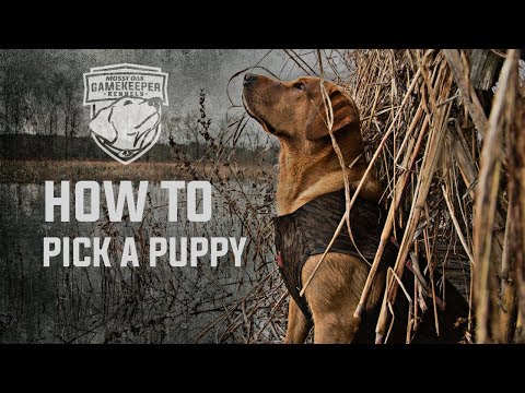 How To Pick Out A Puppy | Mossy Oak Kennels