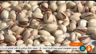 Iran Asgar-Abad village, Qom province, Pistachio harvest برداشت پسته روستاي عسگرآباد قم ايران