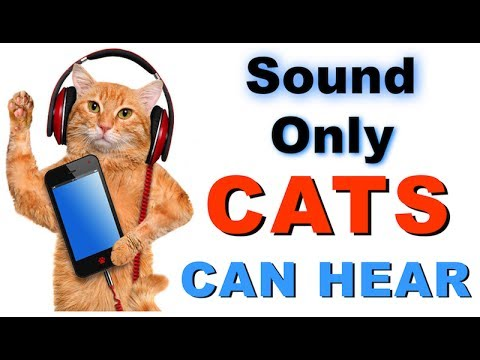 Sound Cats Can Only Hear | HQ