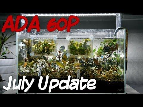 ADA 60 P July Update 070114 - Buce Tank!