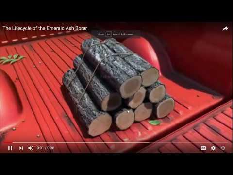 Emerald Ash Borer in Lakeville - Presentation 12-5-17