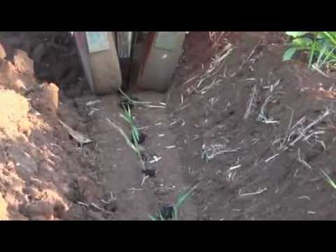 Sugarcane bud chip transplanter  2.wmv