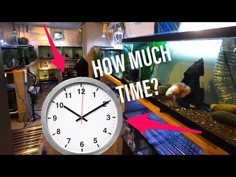 How Much Time Do I Spend Taking Care of My Fish Tanks?