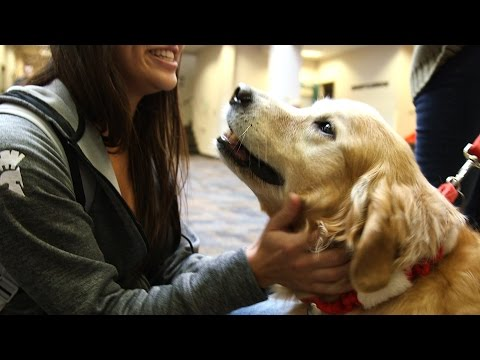 Therapy Dogs Help Student De-stress During Finals Week