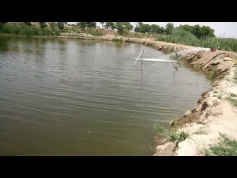 Aeration in fish pond pakistan