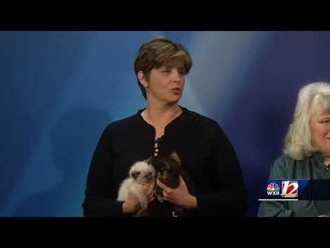 Noon Pets Of The Week:  Sonny, Chloe & Penelope