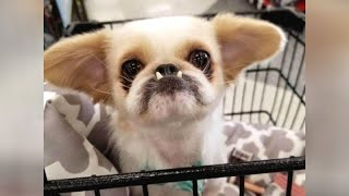 LOL can you BELIEVE THESE VIDEOS? - Most HILARIOUS DOGS