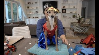My Dogs Try On Halloween Costumes 3