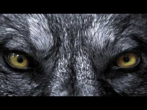 🔮BECOME A WEREWOLF FAST!! FREQUENCY, SUBLIMINAL, BINAURAL BEAT HYPNOSIS MEDITATION SPELL 🔮