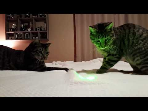 Kitten and Cat Help Make the Bed Then Chase Laser Pointer