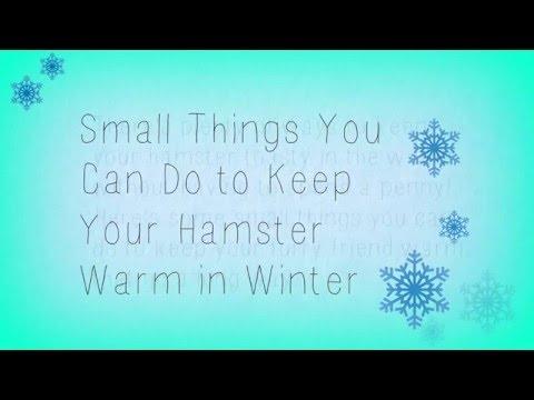 Ways to Keep Hamsters Warm in Winter