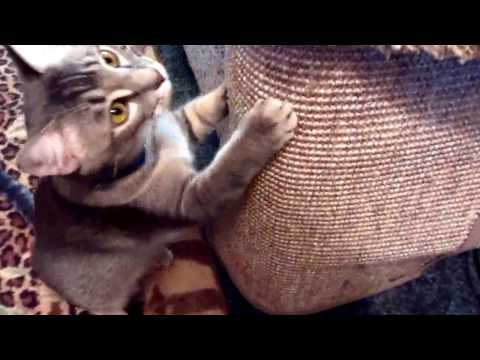 Cat scratcher Idea, Build it into the couch
