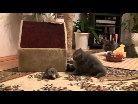 cats on Vimeo 2