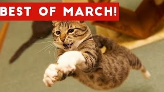 Funniest Pet Reactions & Bloopers of March 2017 | Funny Pet Videos