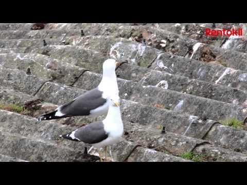 Rentokil Pest Control UK Gull Control Solutions