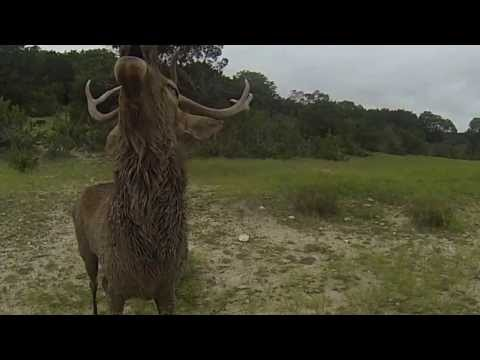 Fossil Rim - Deer Grunting