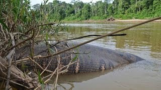Biggest Snakes On Earth Videos 9videos Tv