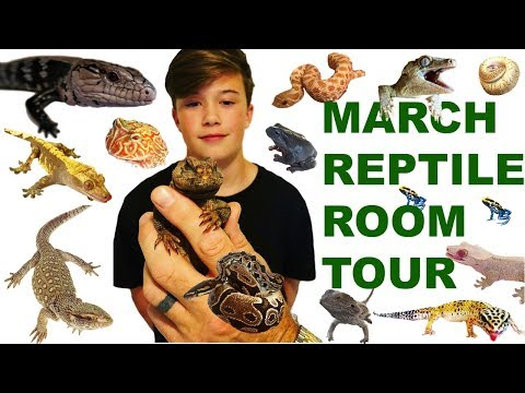 MARCH REPTILE ROOM TOUR - NEW ANIMALS!!!