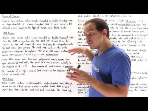 RNA and DNA Viruses
