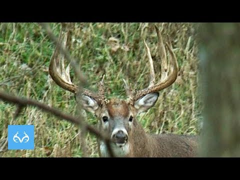 Xxx Mp4 Al Kraus Grunts Buck RIGHT To His Tree In Iowa Monster Buck Monday Presented By Midway USA 3gp Sex