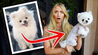 We Can't Believe They Shaved All Our Puppy's Hair Off... This Is What He Looks Like Now...