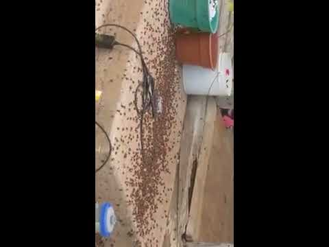 Ants all over a house (there was ants everywhere)